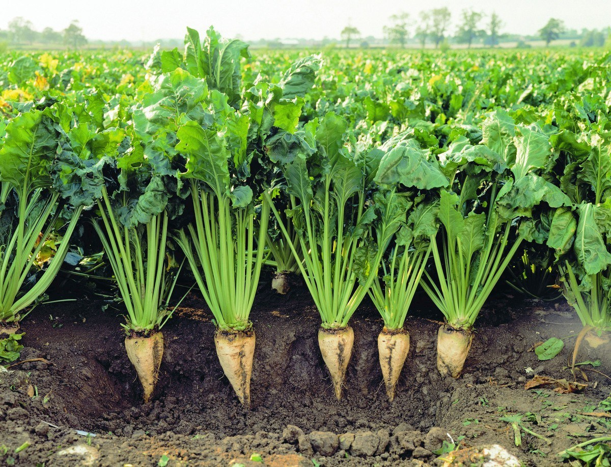 Ne bitkiler var Ekilen bitki grupları nelerdir