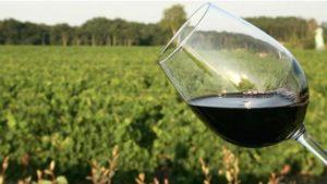 Şarabın tadında toprağın etkisi var mı