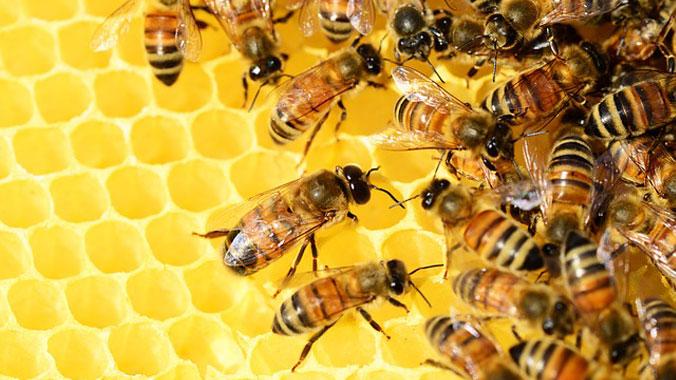 Arı Ailesi ve Aile Bireyleri