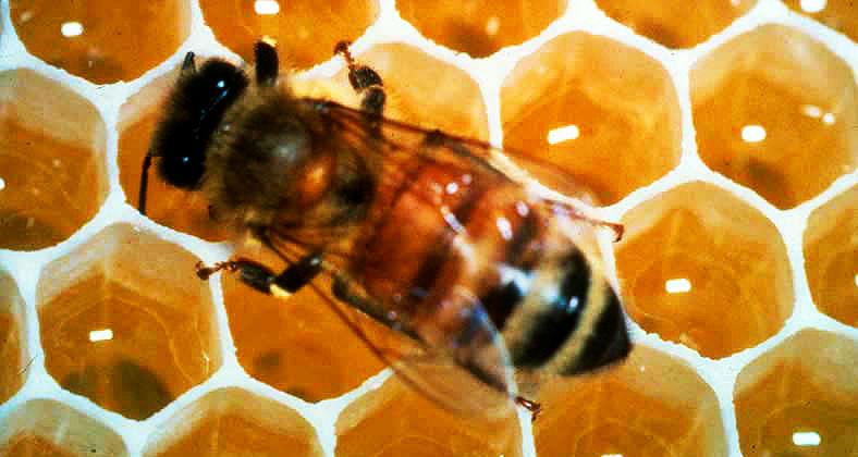 Arı Yetiştiriciliği
