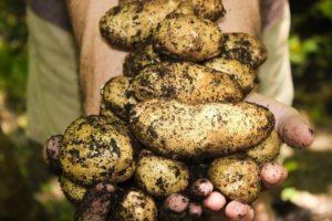 Sattığımız Patatesleri Geri Aldık