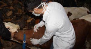 ithal hayvanların sağlık denetiminde veteriner zorunluluğu bitti