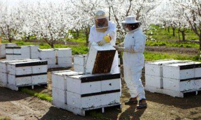 Arı kolonilerinin mevsimsel muayeneleri nelerdir