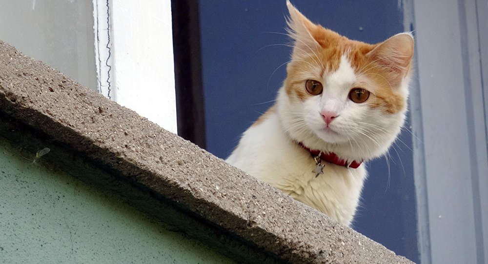 Kediyi korkutayım derken camından oldu