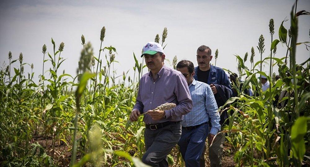 Türkiye ile Sudan arasındaki tarımsal ticaretin geliştirilmesi hedefleniyor