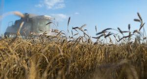 Türkiye ilk kez Ruble ile buğday alacak