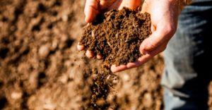 Toprak örneği nasıl alınır ?