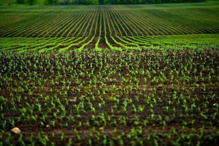 Toprak analizi rekolteyi arttırıp giderleri azaltır