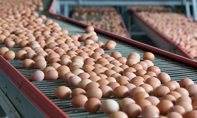 Yumurta fiyatlarını biz indirdik siz de indirin çağrısı
