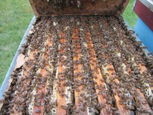 Arı Kolonilerin Beslenmesi