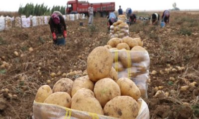 Bir kilo patates 25 Liraya kadar yükseldi
