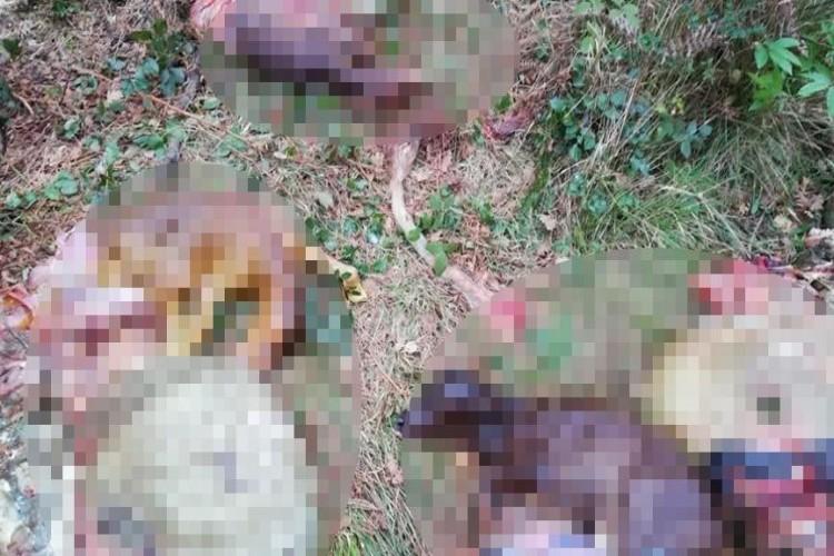 Gebe ineklerin etlerini satıp telef olan yavruları ormanlık alana attılar