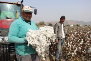Pamuk üreticisi düşen fiyatlara isyan etti