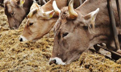 Tarım ve Hayvancılıkta dışa bağımlılık artıyor