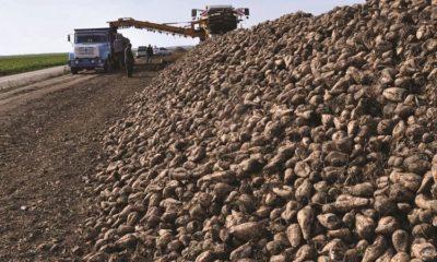 3 Şeker Fabrikasının Satışı İptal Edildi