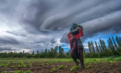 Aralık ayı Tarım ÜFE verisi açıklandı