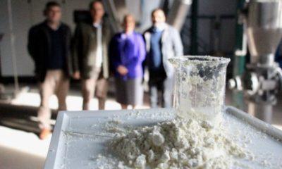 Buzağı can sütü hayat kurtarıyor