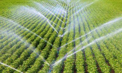 Yağmurlama Sulama Sistemi