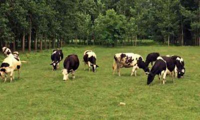 Sürdürülebilir hayvancılık için yem üretmeliyiz!